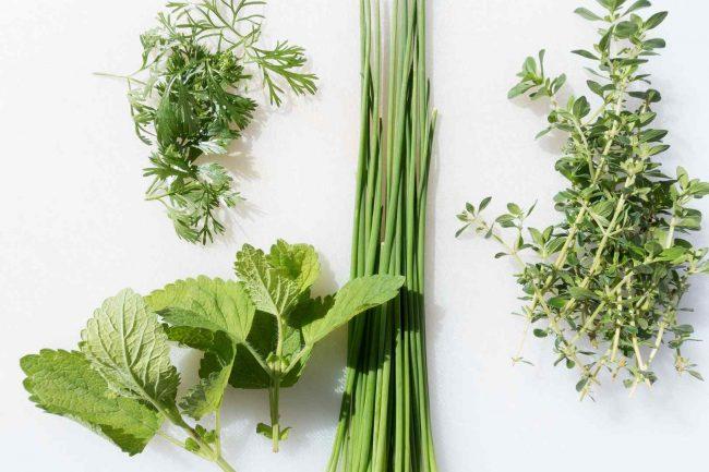 liečivé rastliny zoznam